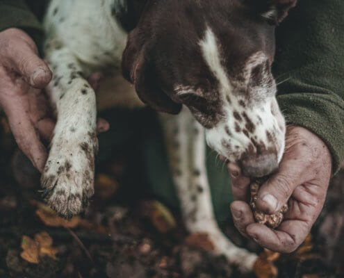 zeigt einen Hund und Trüffel